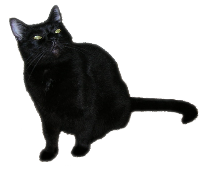 A large black cat.